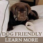 Houston Dog Friendly Hotel
