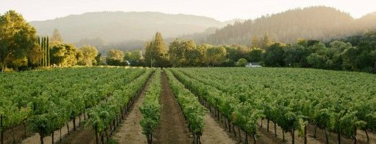 Vineyard views from Las Alcobas, a Luxury Collection Hotel, Napa Valley
